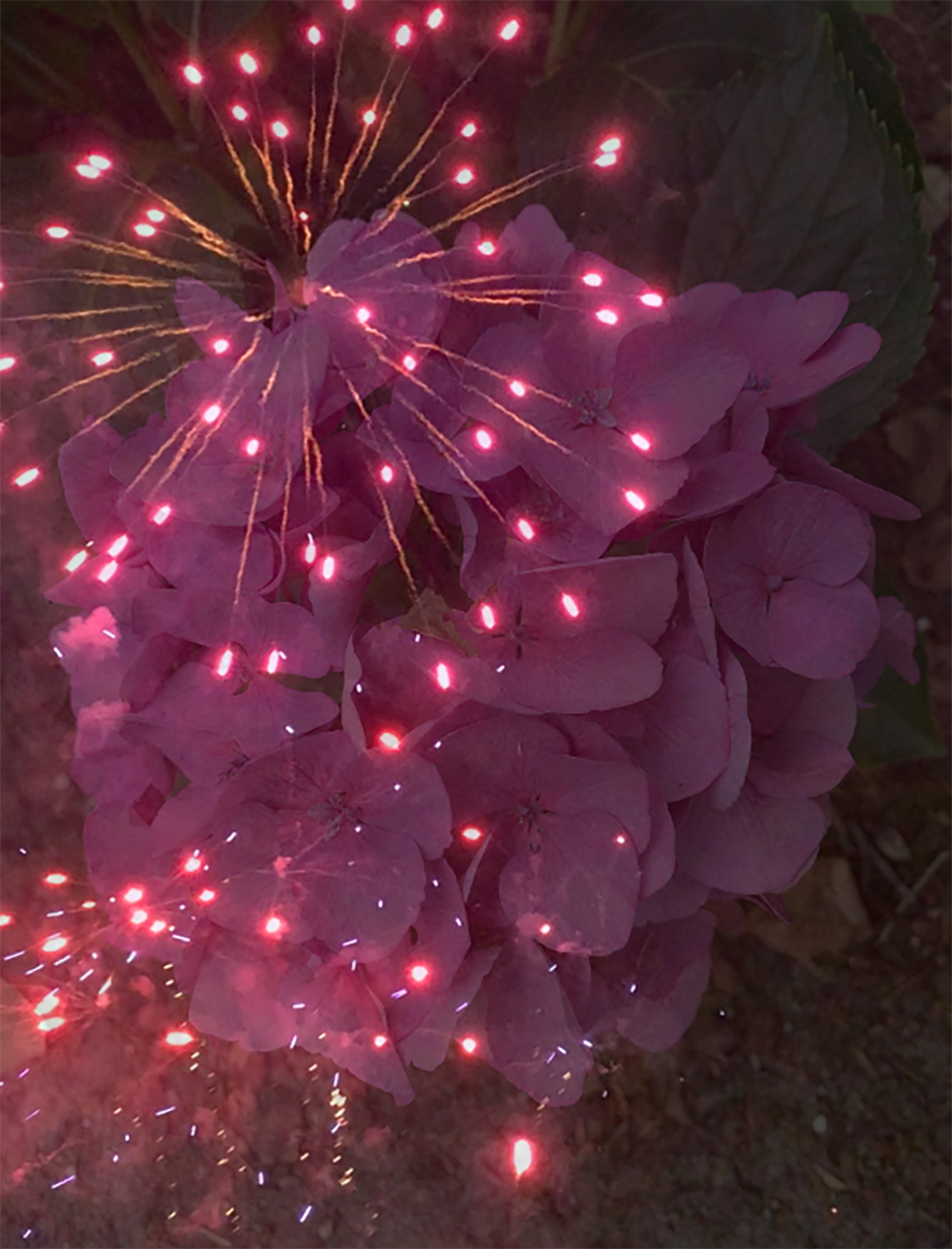 Patchwork Galaxy image of fireworks over purple hydrangea