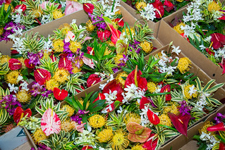 Tropical Flower Arrangements for Sale