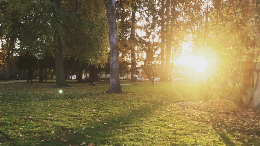 Sun rising behind trees on Forest Grove Campus