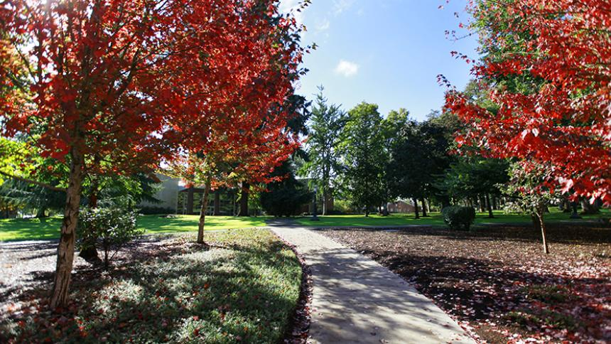 Fall on Forest Grove Campus