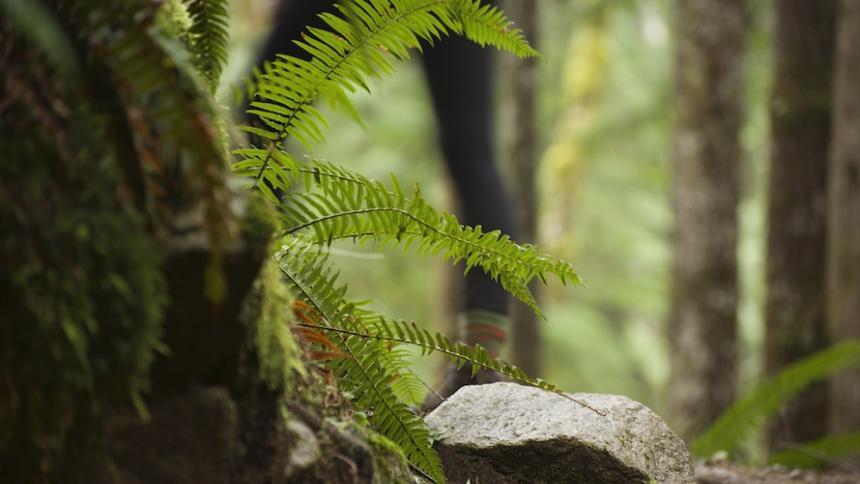 Fern in woods