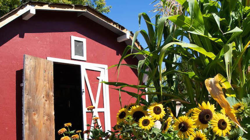 Flowers and shed in Boxer Gardens