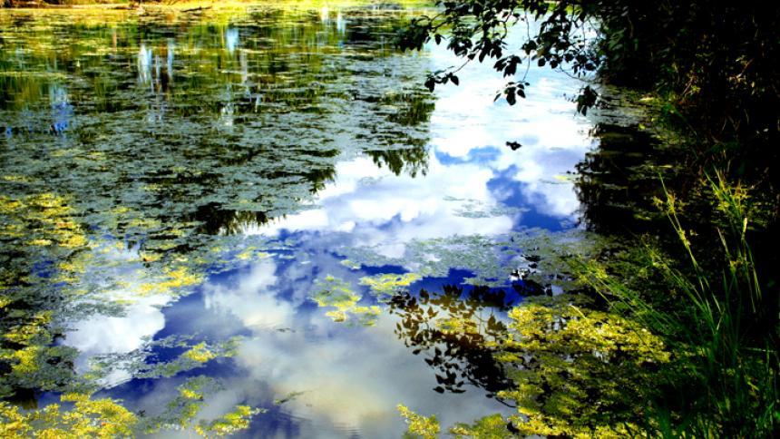 """Pir Monet"" by David K. Brunn"