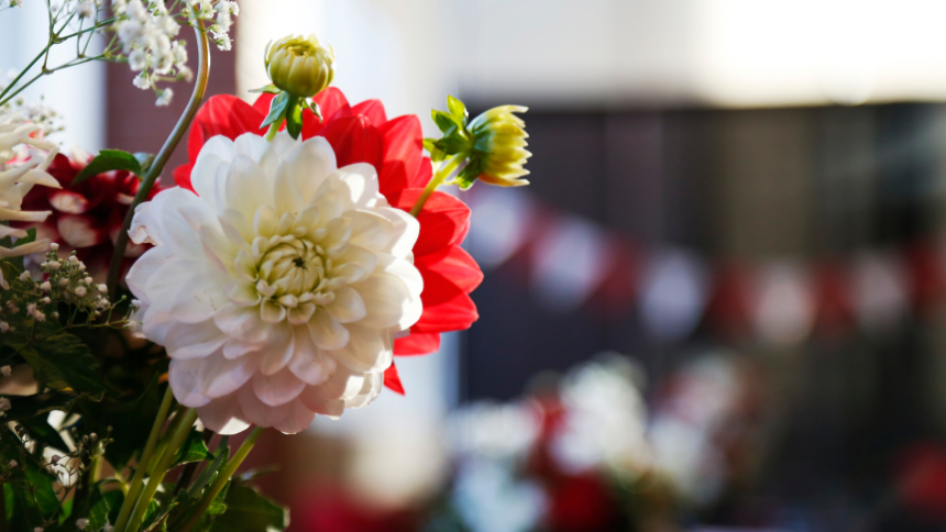 Photo of red and white flowers