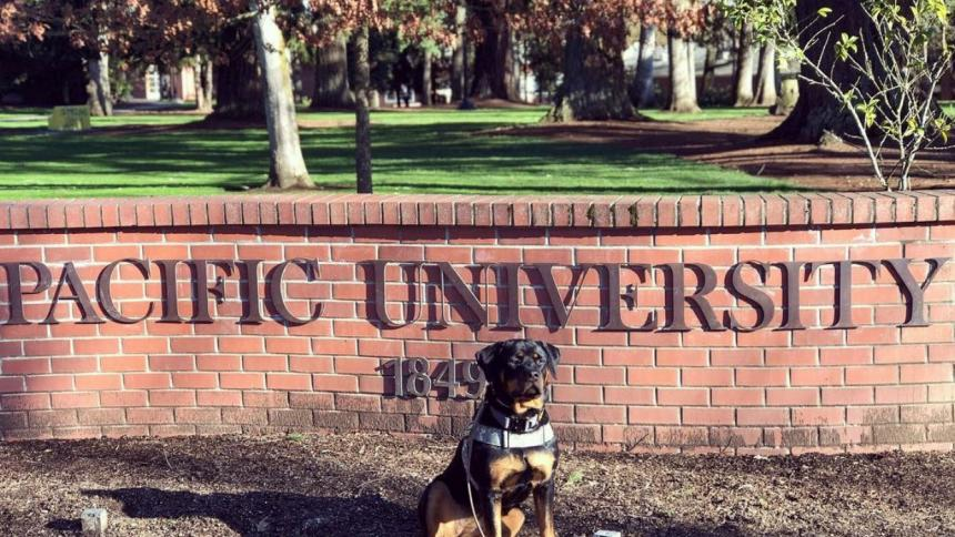 Nala in front of Pacific University entrance