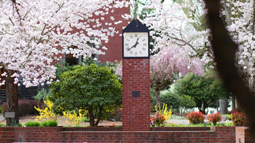 cherry tree by clock on Pacific's campus