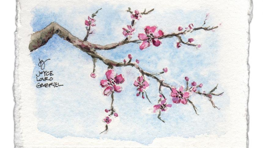 Cherry Blossoms Illustration by Joyce Gabriel, Creative Director of Pacific University