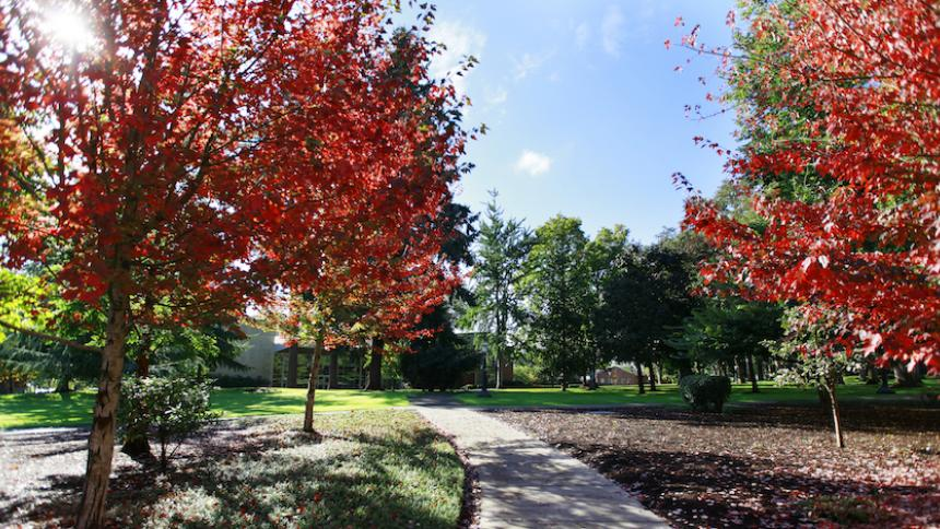 Campus Fall Trees