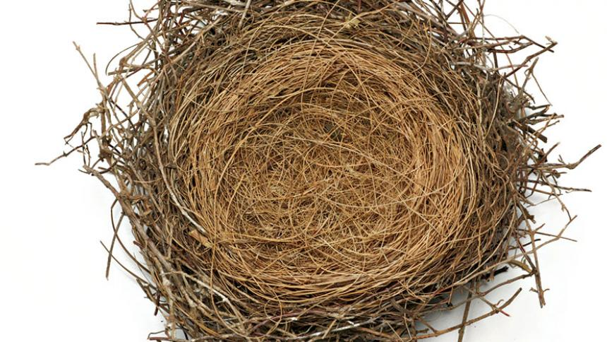 A small bird nest pictured from above